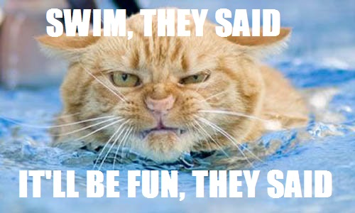 Image result for summer cats swimming meme